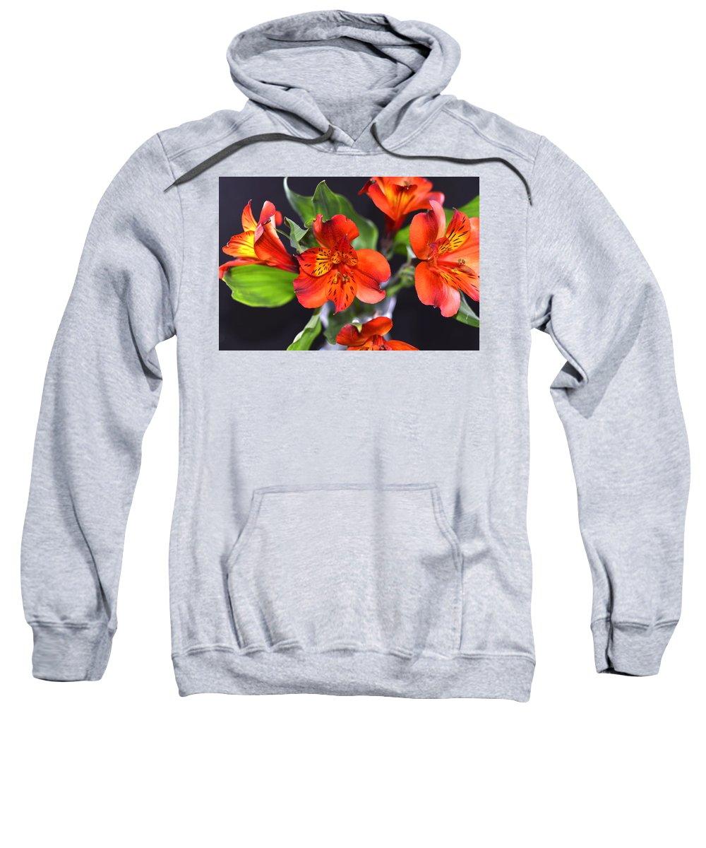 Macro Sweatshirt featuring the photograph Trio Of Alstroemeria Inca Flowers-4 by Jennifer Wick
