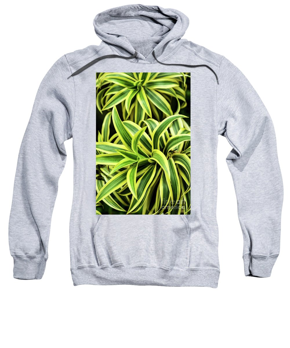 Plant Sweatshirt featuring the photograph Tropical Plant by Iris Greenwell