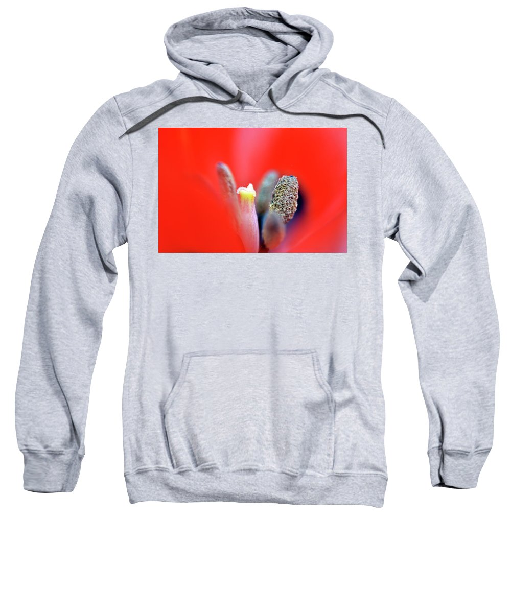 Tulip Sweatshirt featuring the photograph Tulip At Amatzia Forest - 1 by Dubi Roman