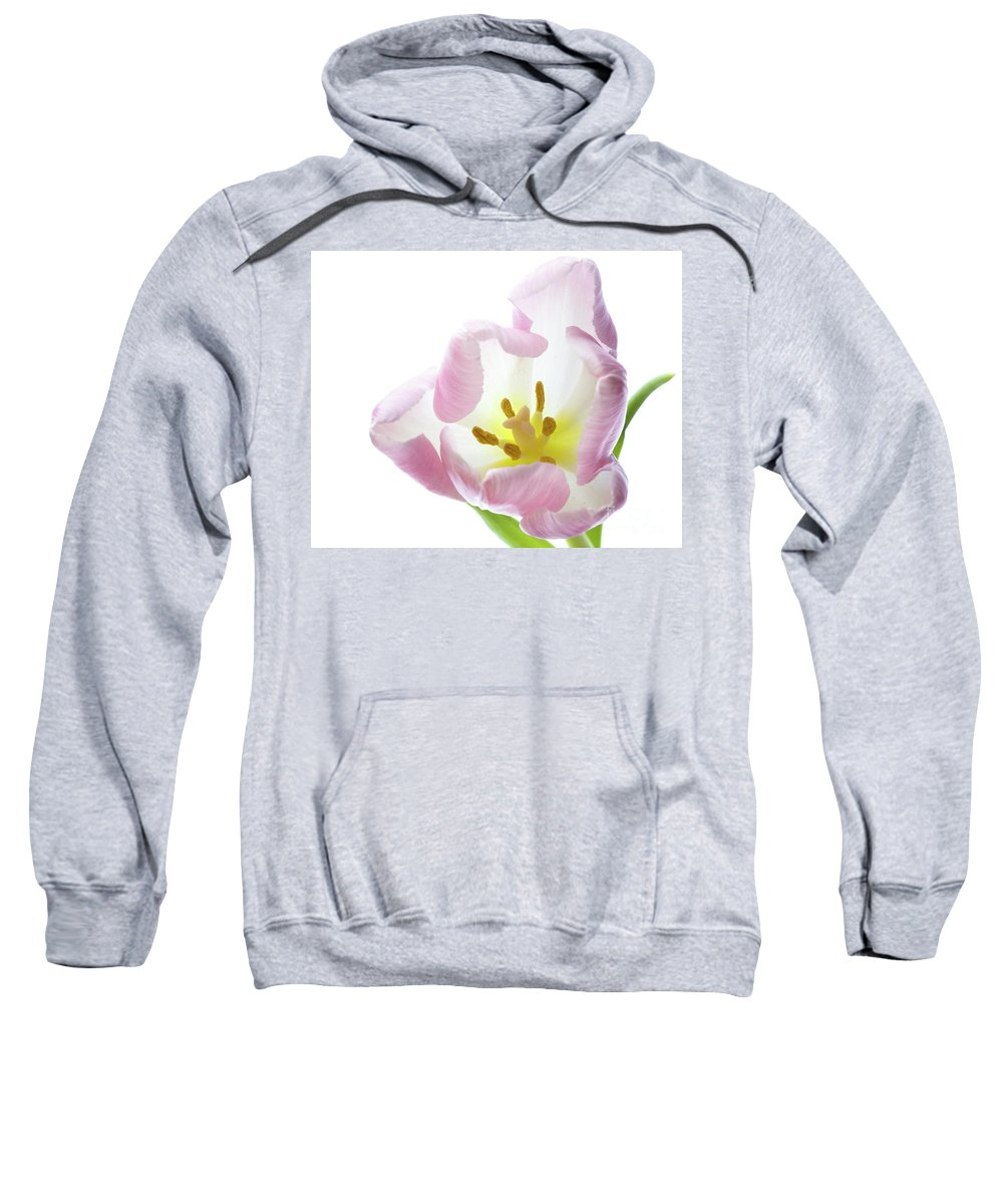 Flower Sweatshirt featuring the photograph Tulip Bloom 2 by Kelly Merlini