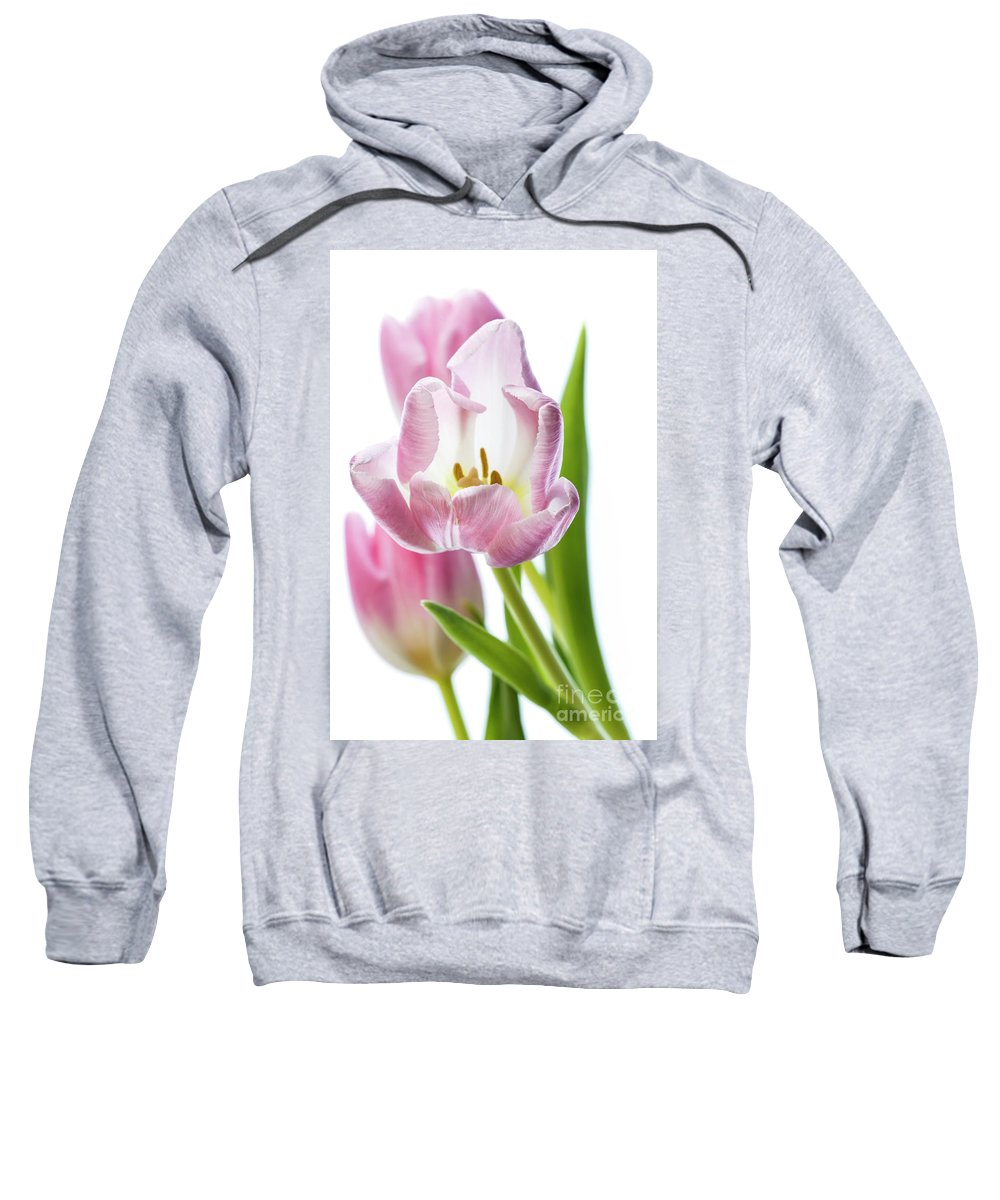 Flower Sweatshirt featuring the photograph Tulip Bloom 3 by Kelly Merlini