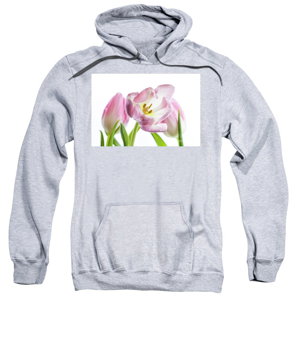 Flower Sweatshirt featuring the photograph Tulip Bloom 4 by Kelly Merlini