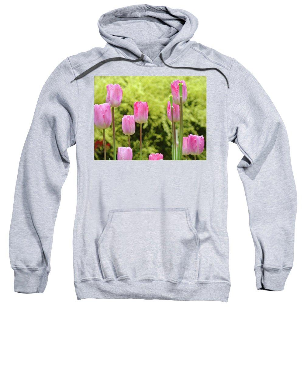 Tulip Sweatshirt featuring the photograph Tulip Garden Landscape Art Prints Pink Tulips Floral Baslee Troutman by Baslee Troutman