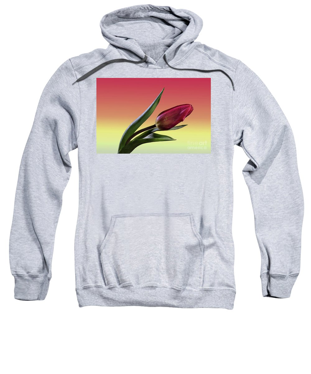 Tulip Sweatshirt featuring the photograph Tulip Love by Tod and Cynthia Grubbs