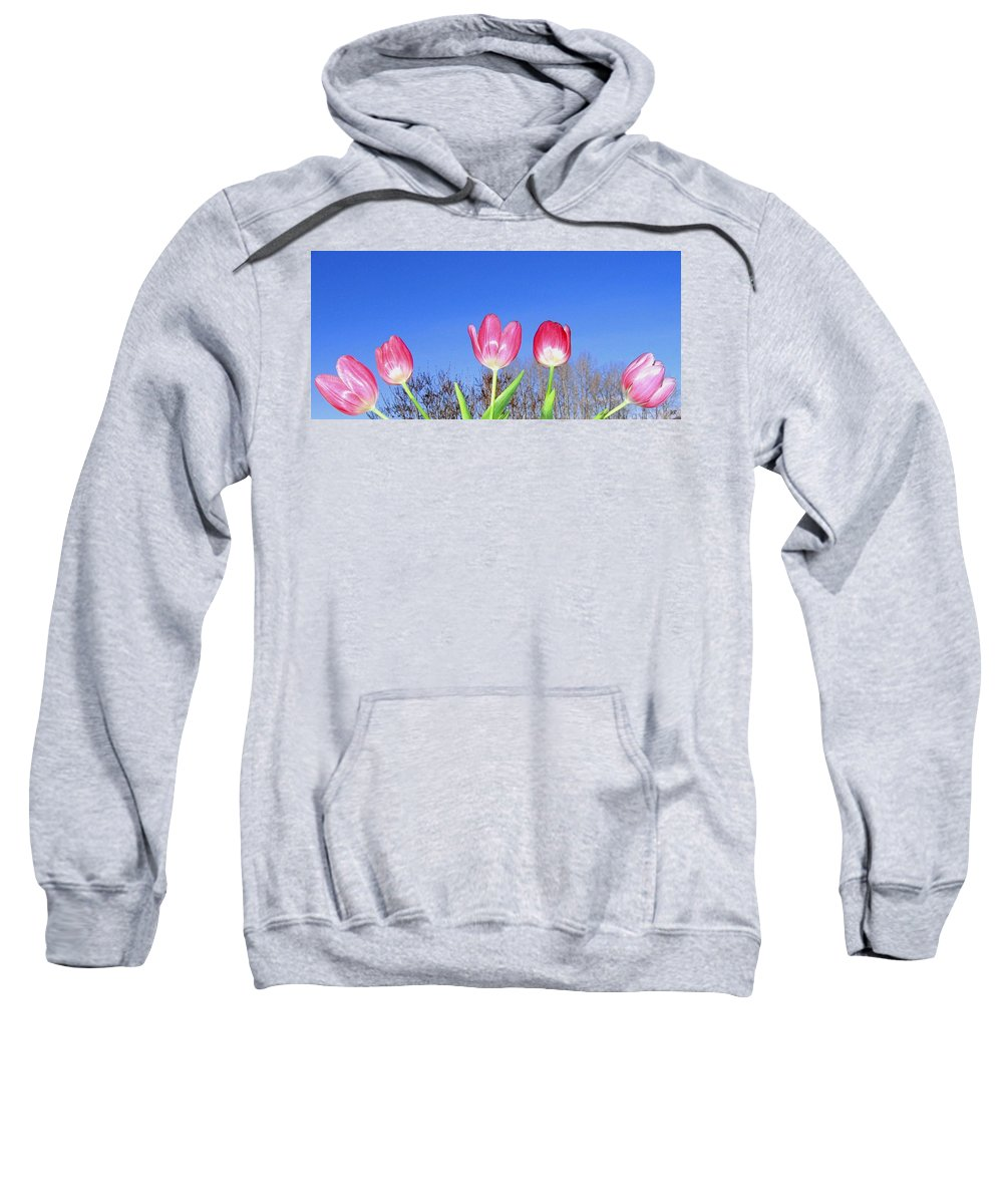 Tulips Sweatshirt featuring the photograph Tulip Panorama by Will Borden