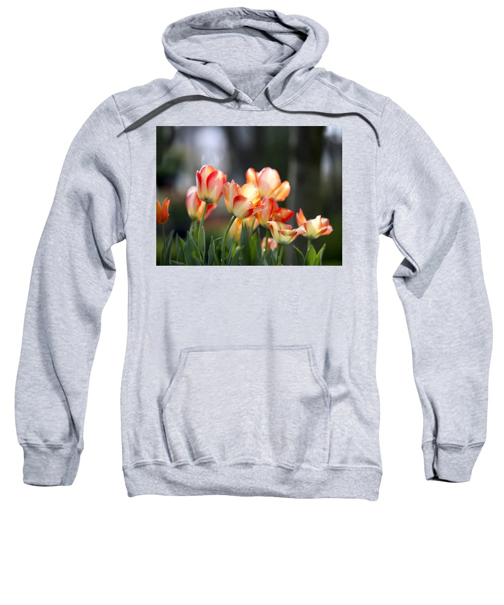 Tulip Sweatshirt featuring the photograph Tulips by AC Parsons