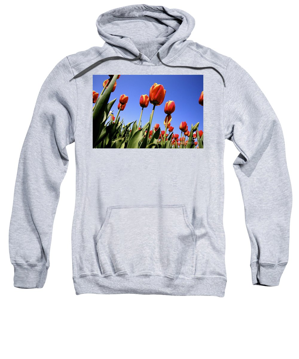Tulips Sweatshirt featuring the photograph Tulips Time 3 by Robert Pearson