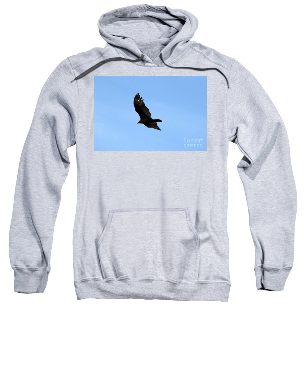 Turkey Vulture Sweatshirt featuring the photograph Turkey Vulture by David Lee Thompson