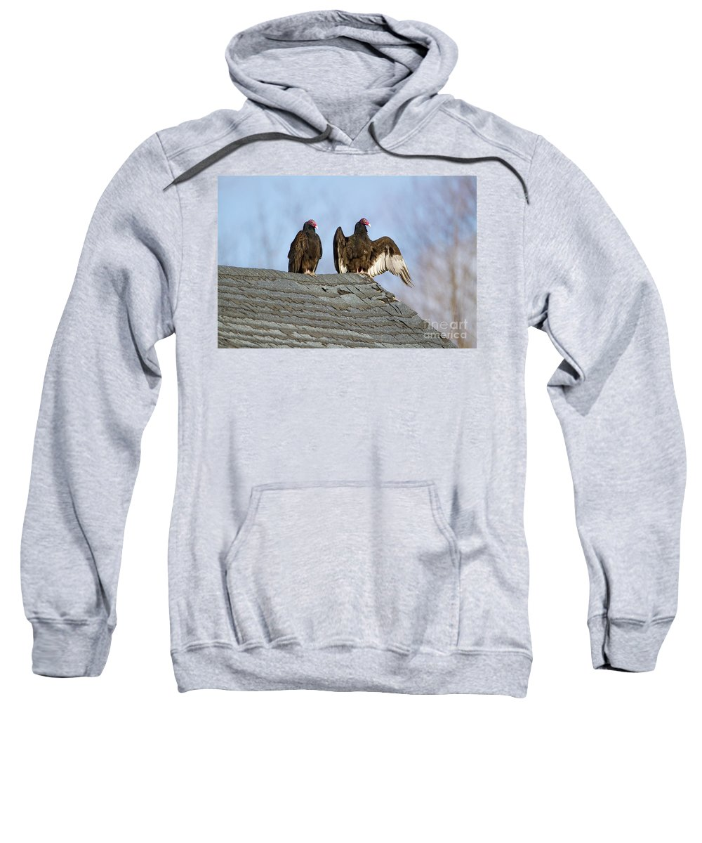 Turkey Vulture Sweatshirt featuring the photograph Turkey Vultures On Roof by Marie Read