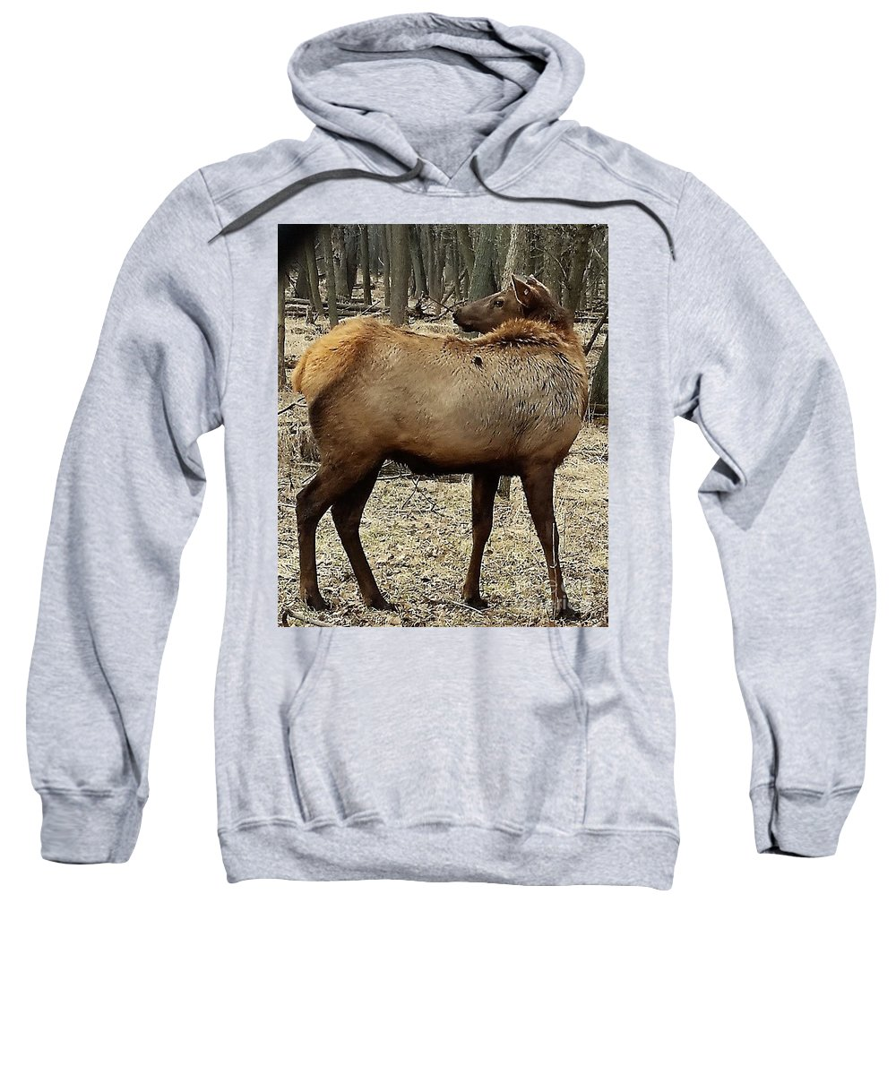 Turning Elk Sweatshirt featuring the photograph Turning Elk by Jane Butera Borgardt