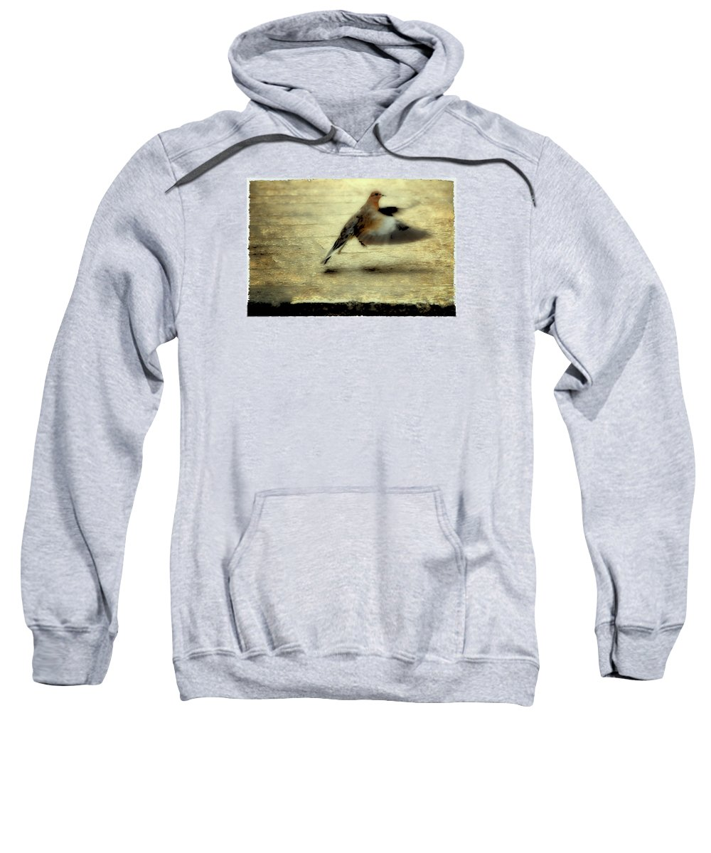 Jewish Sweatshirt featuring the photograph Turtle Dove by Deb Cohen