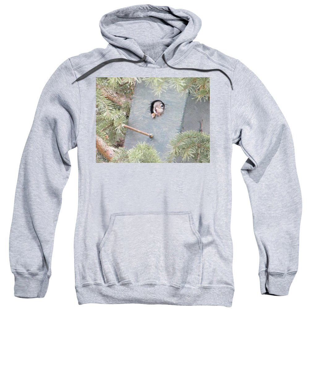 Squirrel Sweatshirt featuring the photograph Tweet by David Parsons
