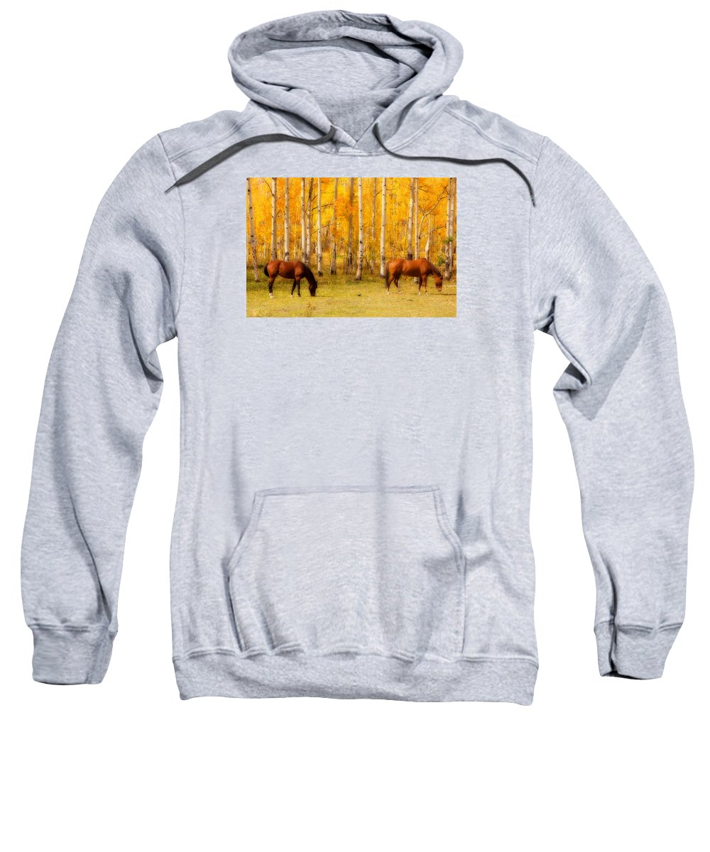 Autumn Sweatshirt featuring the photograph Two Horses In The Colorado Fall Foliage by James BO Insogna