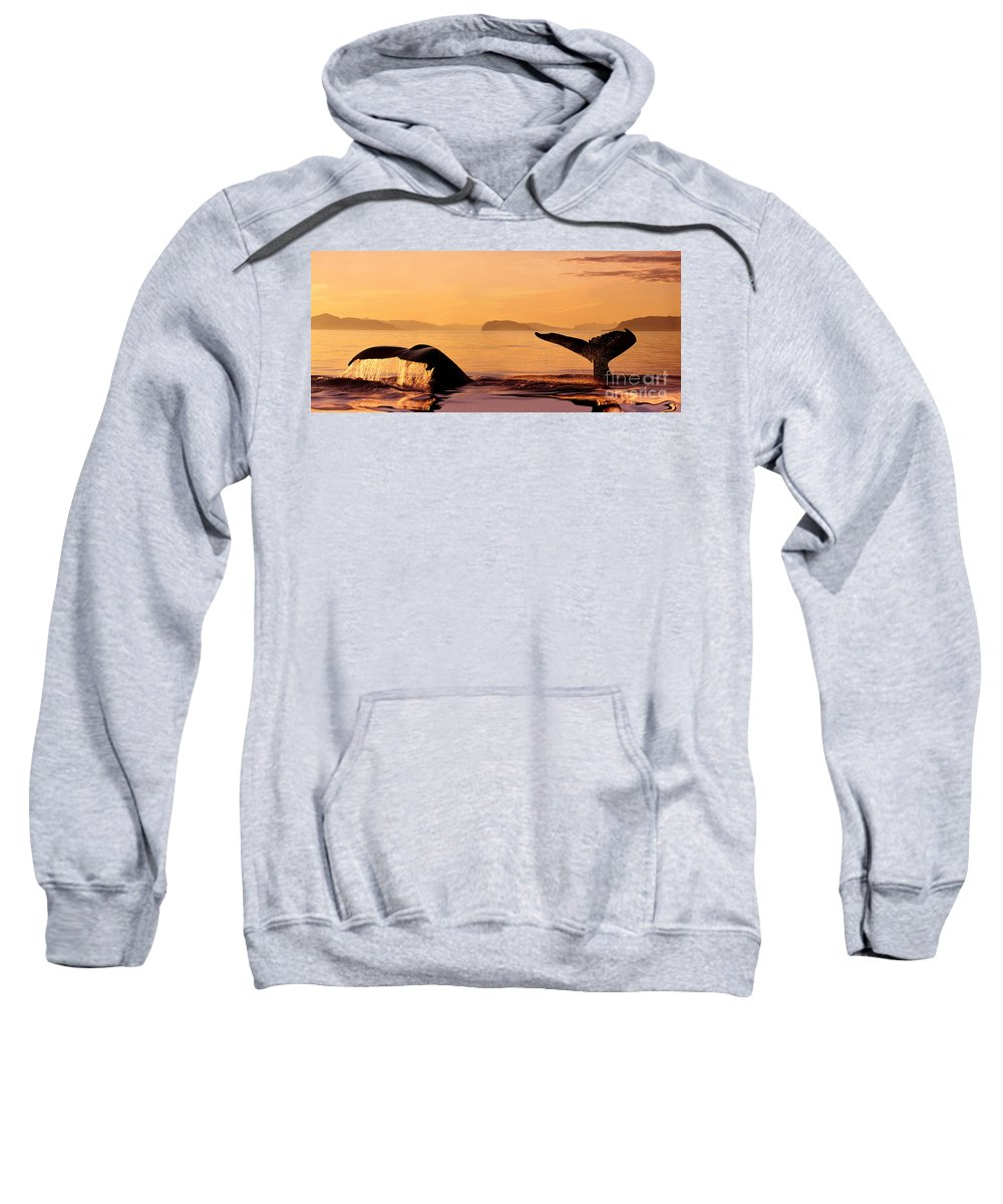 Amaze Sweatshirt featuring the photograph Two Humpback Whales by John Hyde - Printscapes