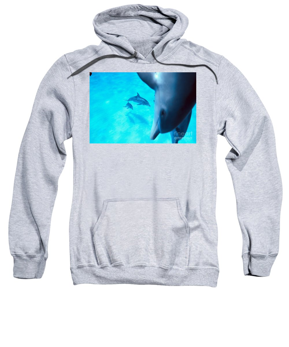 Animal Art Sweatshirt featuring the photograph Two Pairs Of Dolphins by Ed Robinson - Printscapes