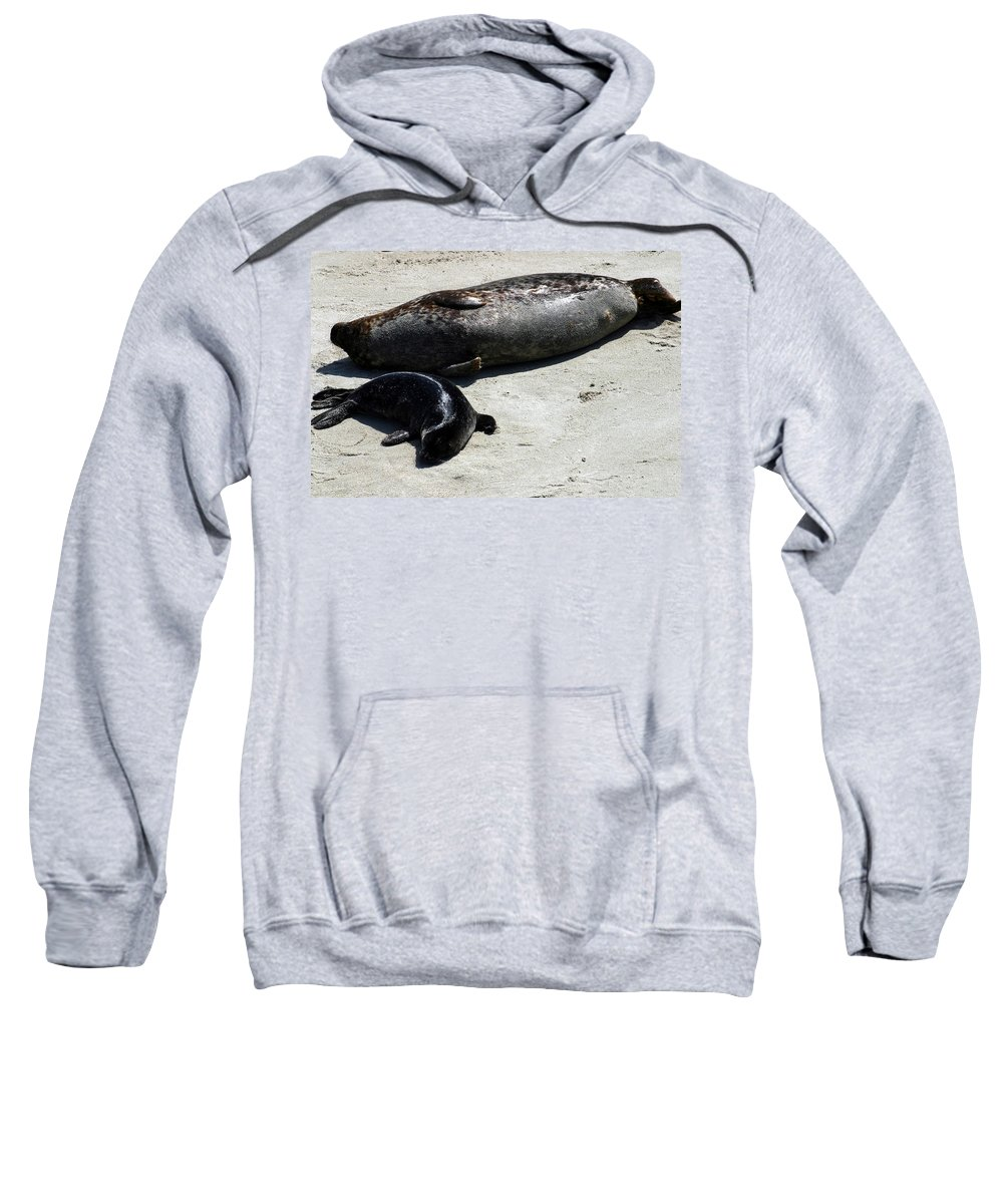 Seal Sweatshirt featuring the photograph Two Seals by Anthony Jones