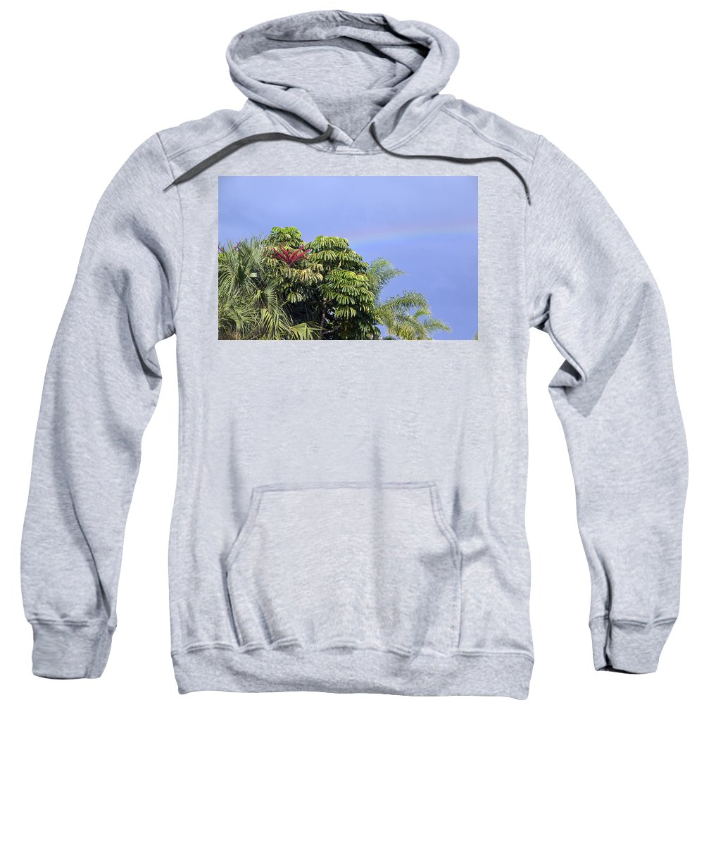Rainbow Sweatshirt featuring the photograph Umbrella Tree With Rainbow And Flower by Allan Hughes