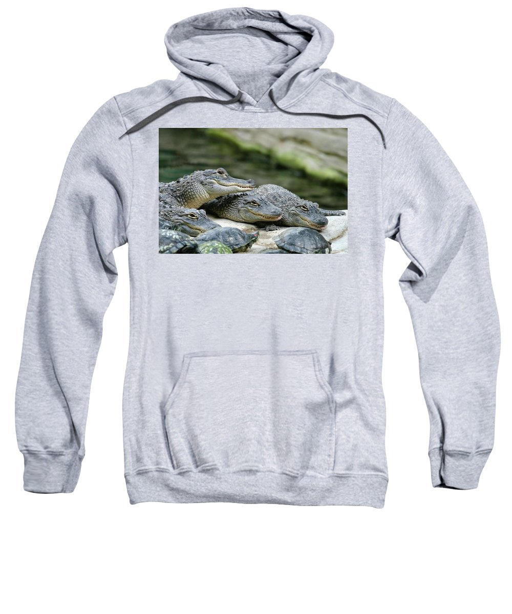 Alligator Sweatshirt featuring the photograph Up To No Good by Anthony Jones