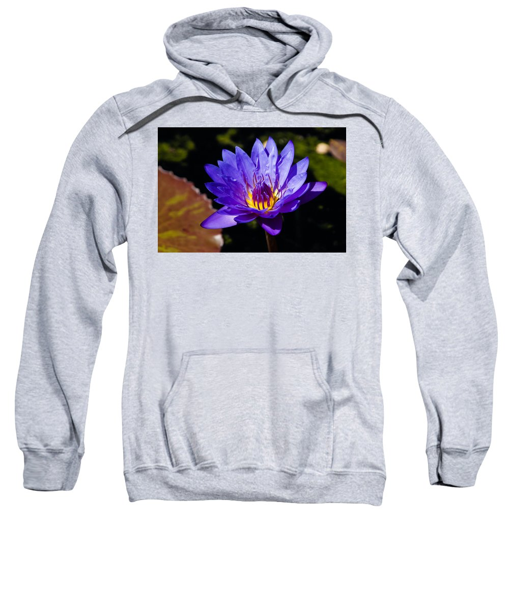 Georgia Mizuleva Sweatshirt featuring the photograph Upbeat Violet Elegance - The Beauty Of Waterlilies by Georgia Mizuleva