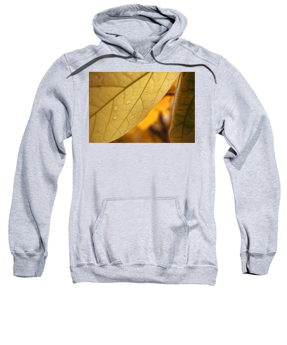 Yellow Sweatshirt featuring the photograph Vampire Veins by Trish Hale