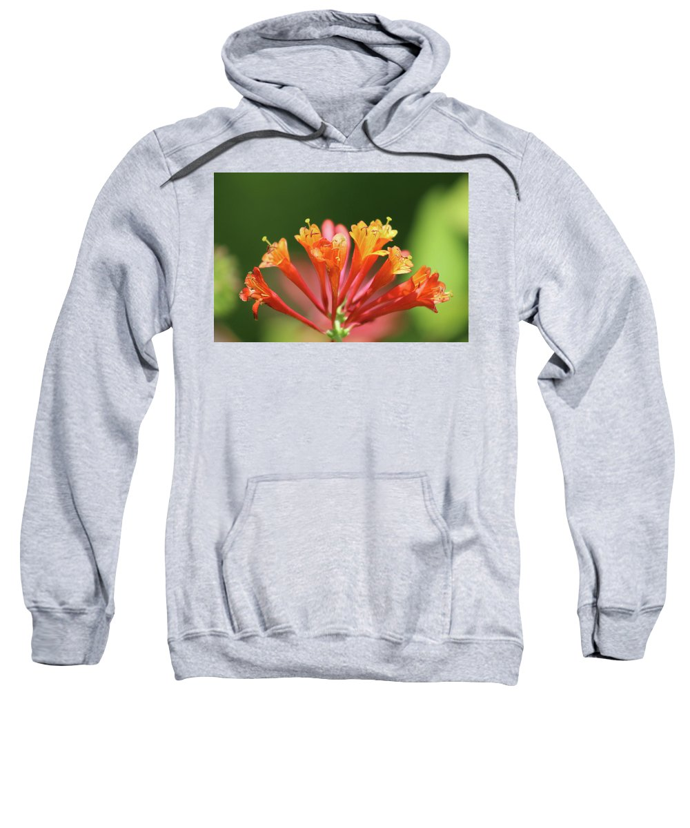 Flower Sweatshirt featuring the photograph Verbena by Walter Stankiewicz