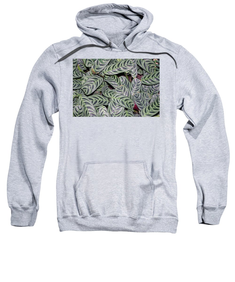 Leaves Sweatshirt featuring the photograph Verigated Green Leaves by Alice Markham