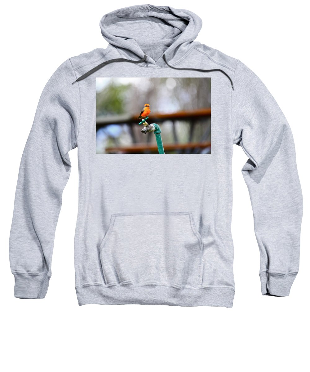 Birds Sweatshirt featuring the photograph Vermilion Flycatcher Two by Diana Hatcher