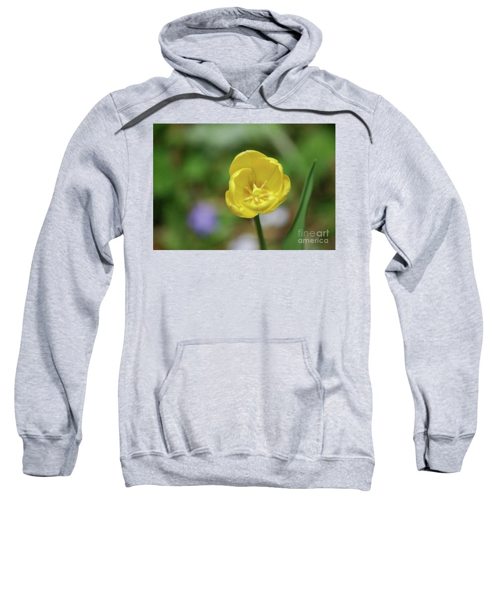 Tulip Sweatshirt featuring the photograph Very Pretty Flowering Yellow Tulip Blooming In A Garden by DejaVu Designs
