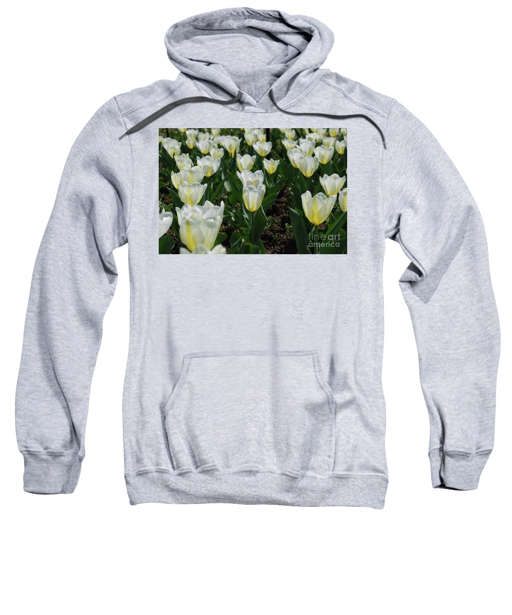 Tulip Sweatshirt featuring the photograph Very Pretty Spring Garden With Flowering White Tulips by DejaVu Designs