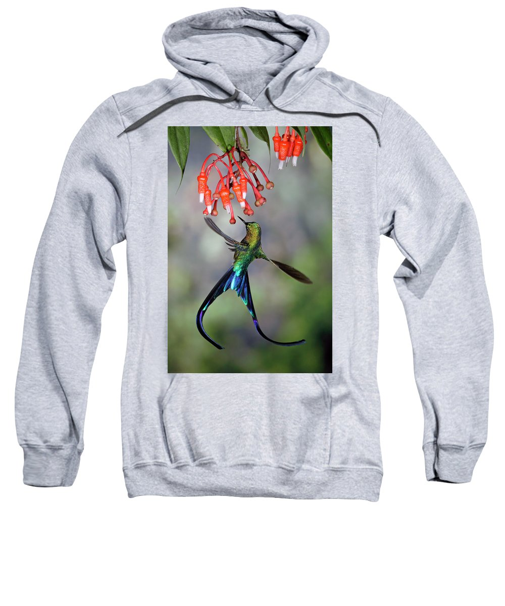 Mp Sweatshirt featuring the photograph Violet-tailed Sylph Feeding by Michael and Patricia Fogden