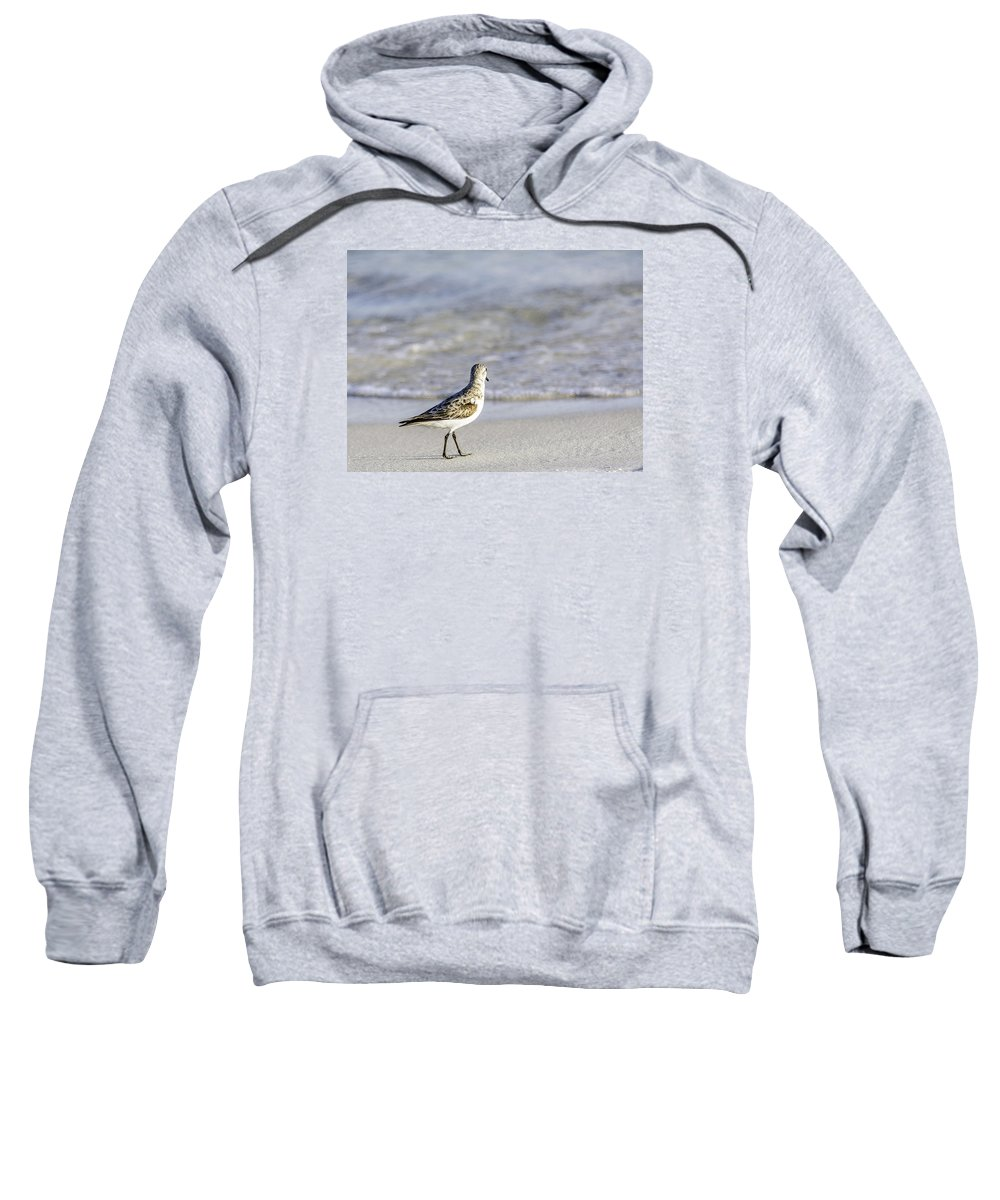 Birds Sweatshirt featuring the photograph Waiting For Dinner by Shutter Click Photography