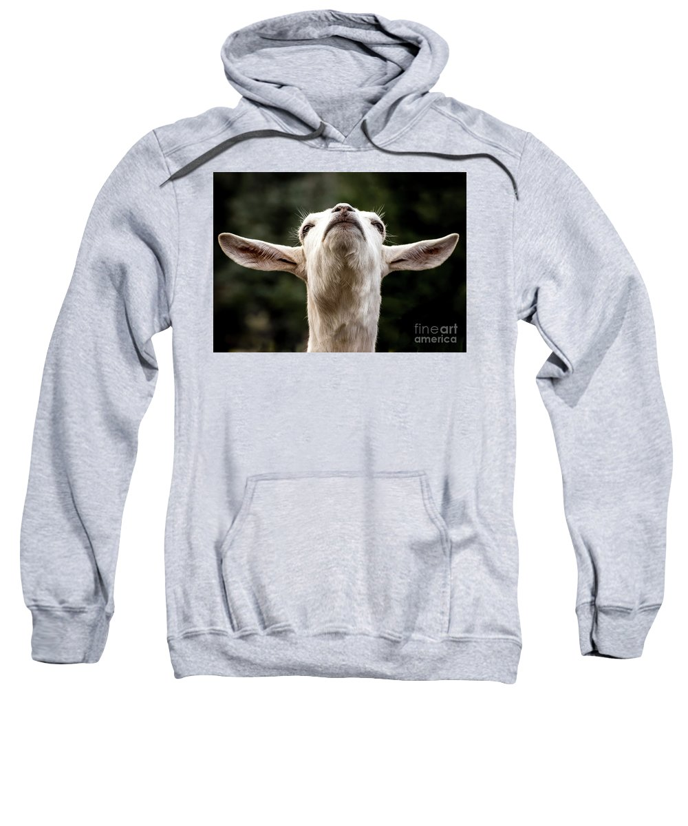 Colorado Springs Zoo Sweatshirt featuring the photograph Waiting For The Rapture by Jennifer Mitchell