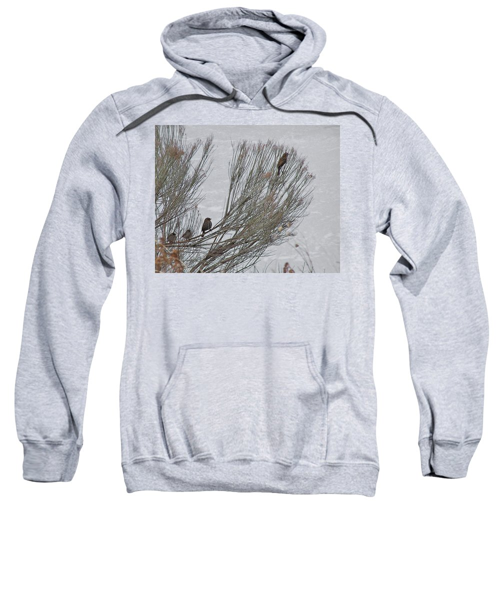 Waiting In Line Sweatshirt featuring the photograph Waiting In Line by Ernie Echols