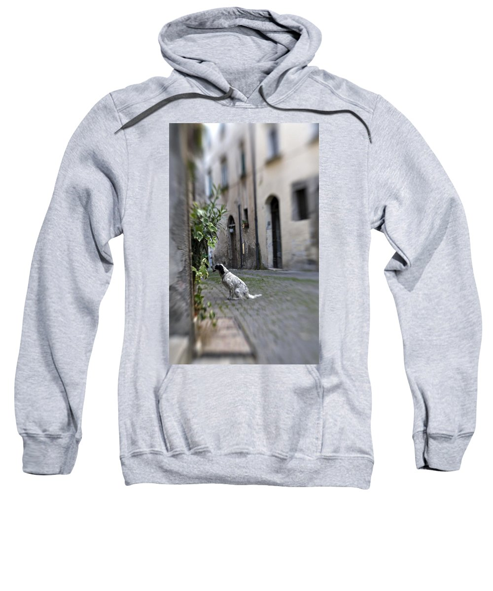 Dog Sweatshirt featuring the photograph Waiting by Marilyn Hunt