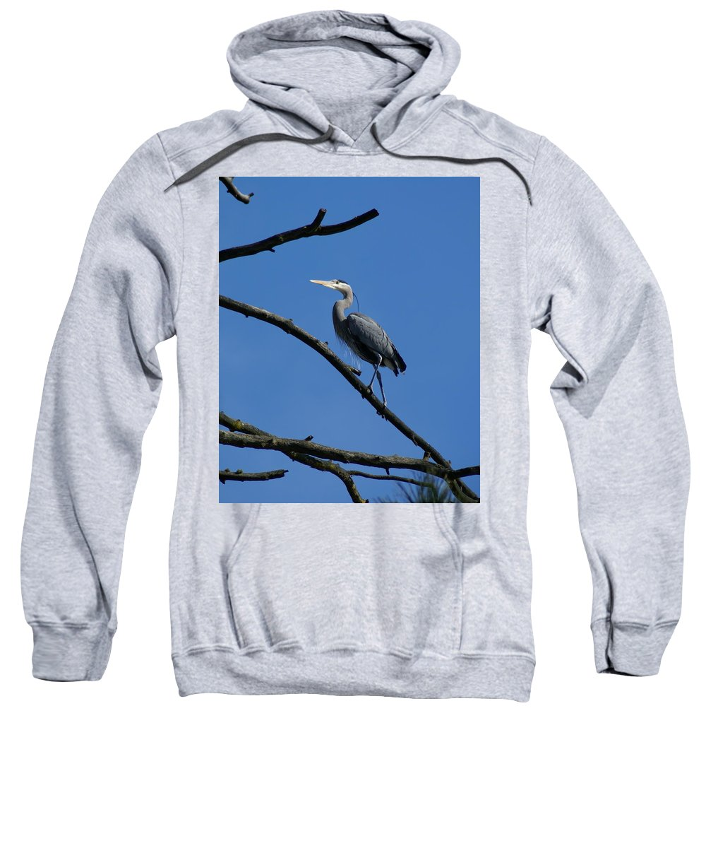 Birds Sweatshirt featuring the photograph Walking The High Branch by Ben Upham III