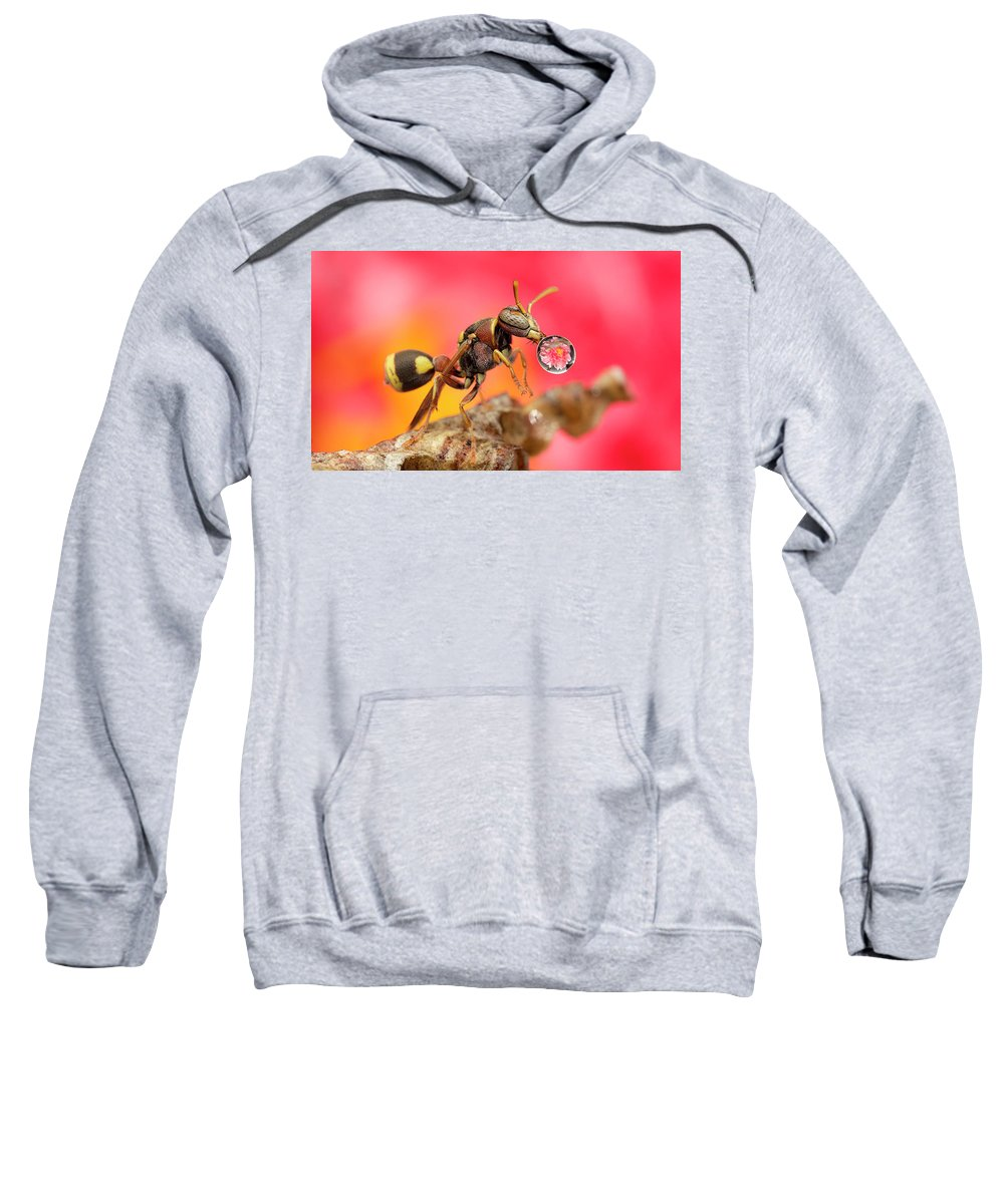 Macro Sweatshirt featuring the photograph Wasp Blowig Bubble 160507e by Lim Choo How