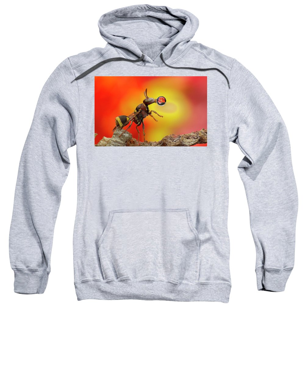 Macro Sweatshirt featuring the photograph Wasp Blowing Bubble 160605d by Lim Choo How