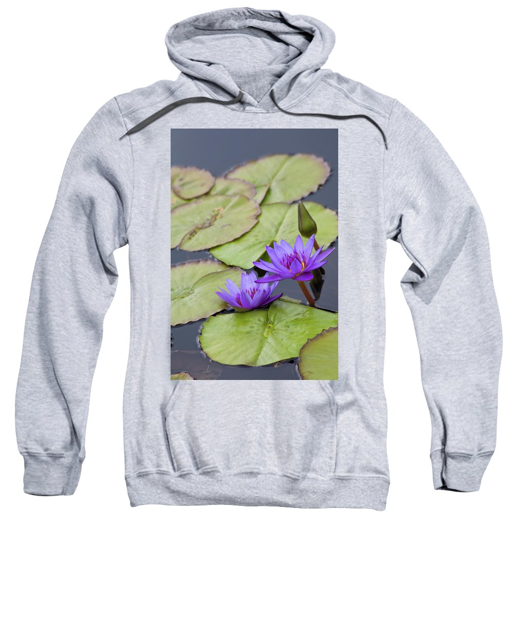 Cultivated Sweatshirt featuring the photograph Water Lilies by Diane Macdonald