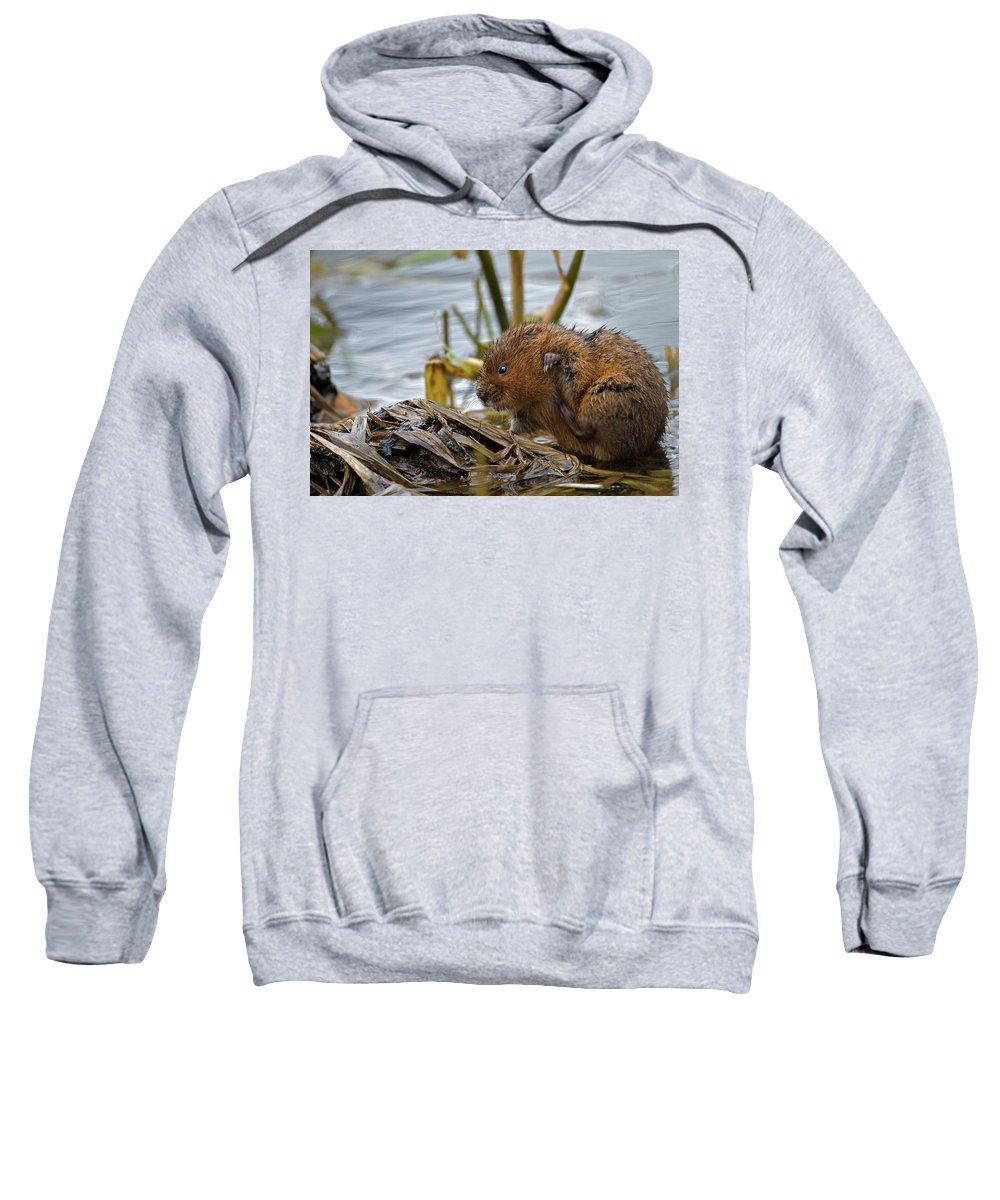 Water Vole Sweatshirt featuring the photograph Water Vole Cleaning by Bob Kemp