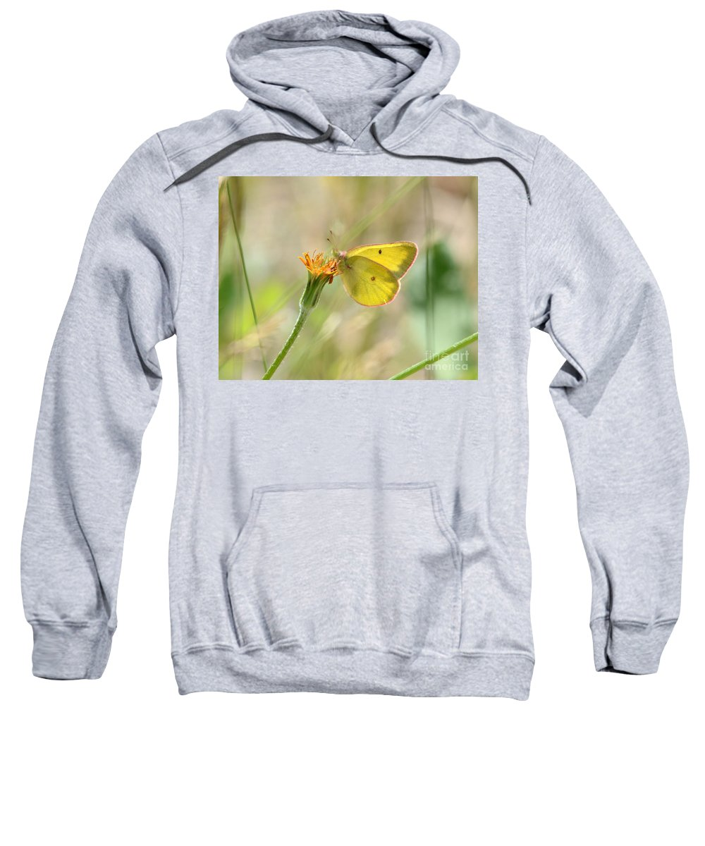 Western Sweatshirt featuring the photograph Wester Sulfur Butterfly by Brad Christensen