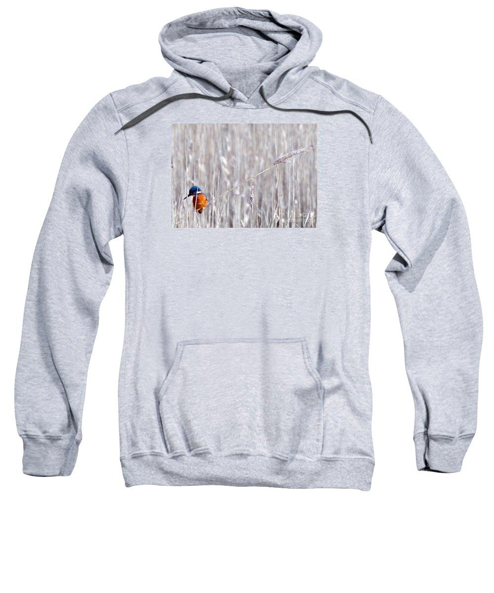 Kingfisher Sweatshirt featuring the photograph Weston Kingfisher by Paul Cummings