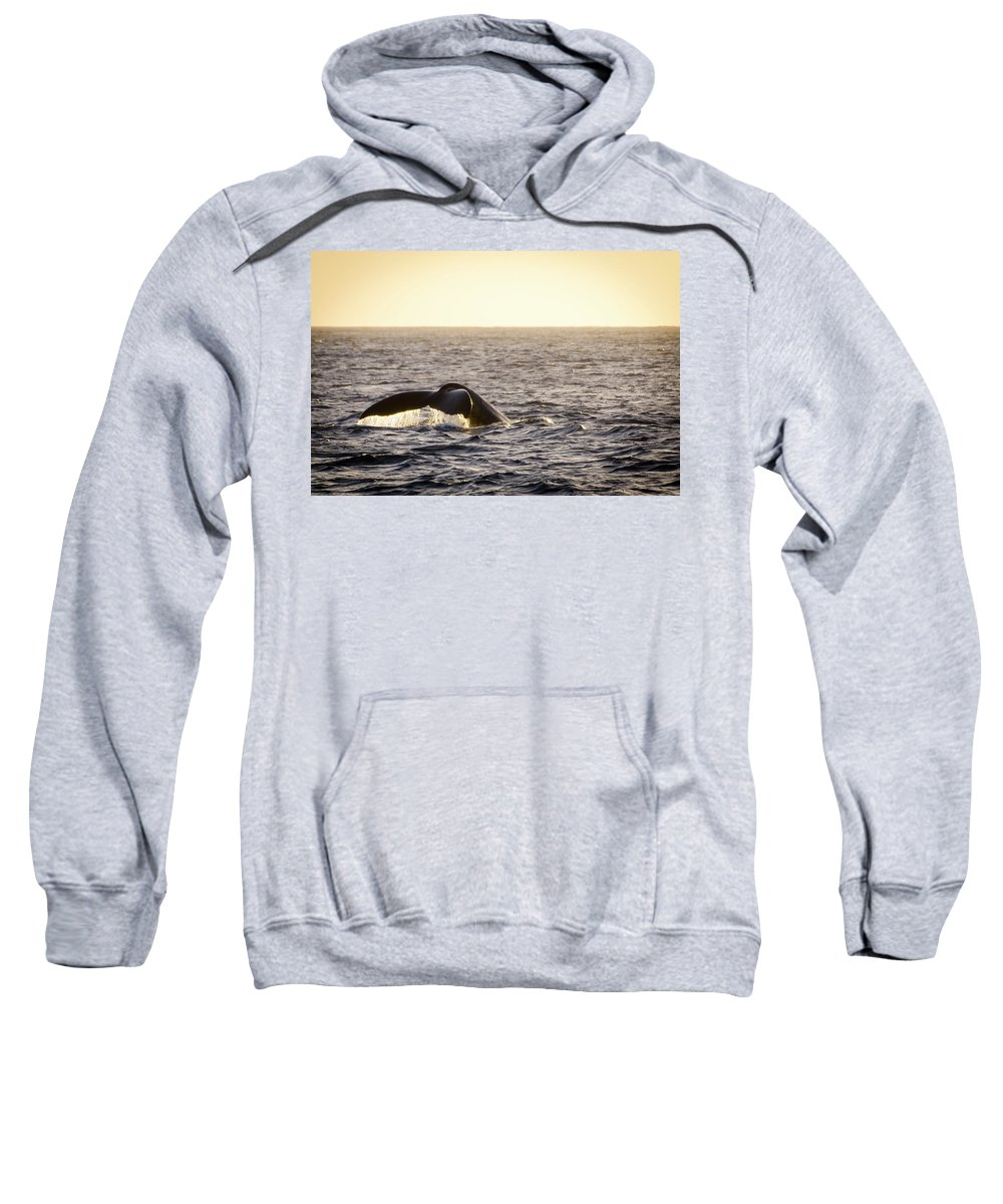 Animals Sweatshirt featuring the photograph Whale Fluke by Daniel Murphy
