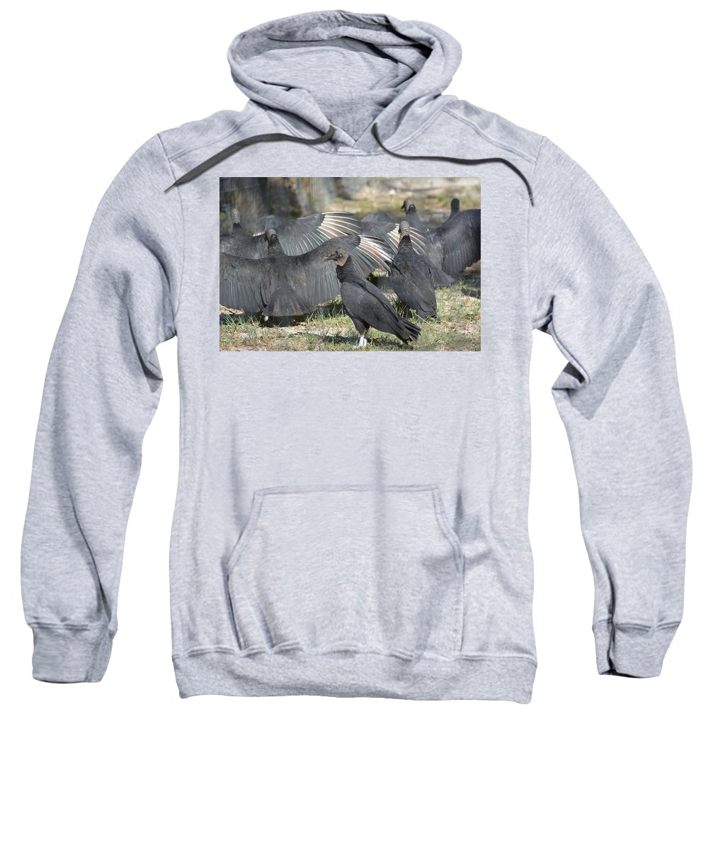 Black Vulture Coragyps Atratus Animal Wildlife Bird Nature Scavangers Carrion Feeders Wings Spread Don Columbus Photography Naples Florida Sweatshirt featuring the photograph What Are They Hiding From Me by Don Columbus