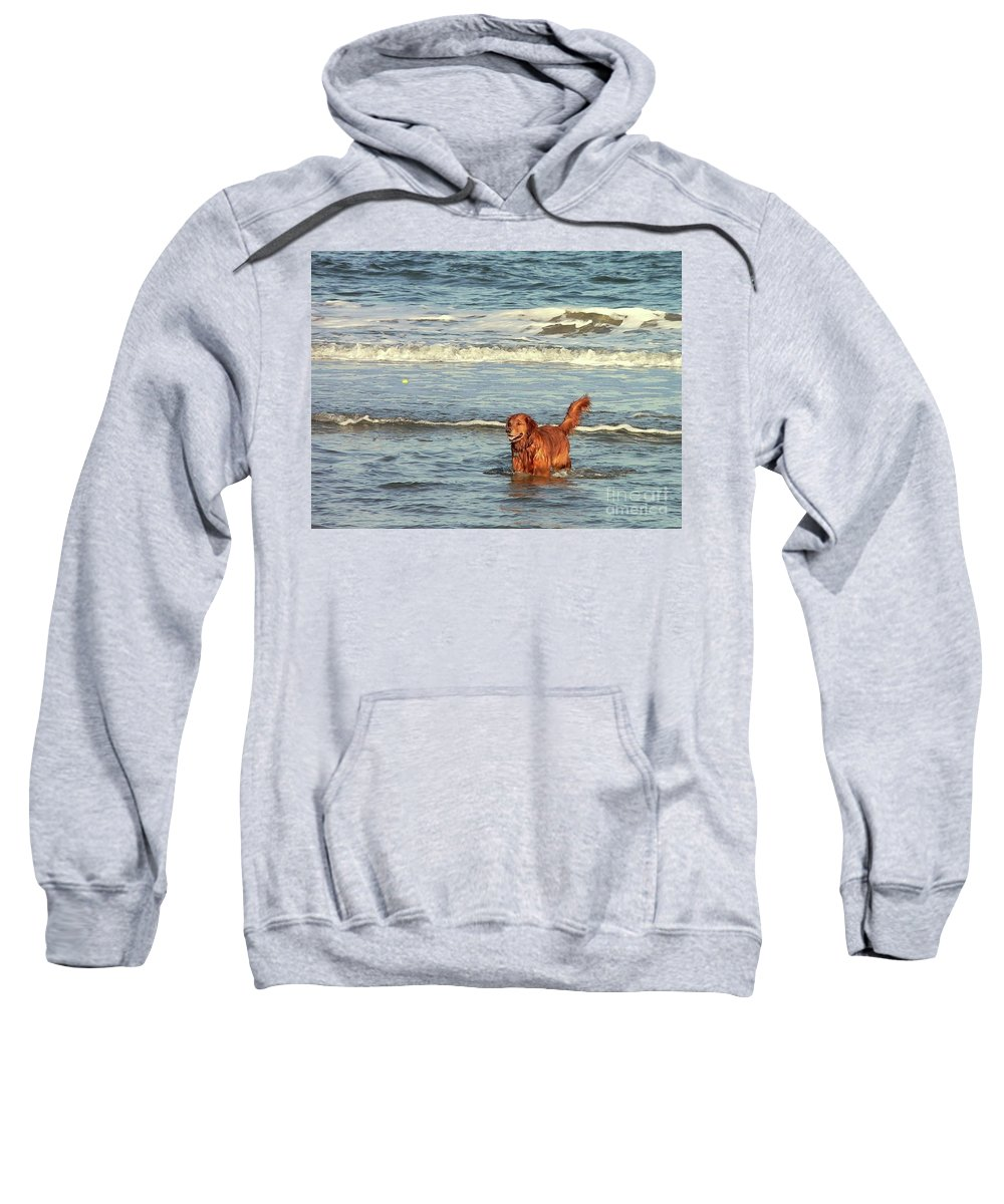 Pet Sweatshirt featuring the photograph Where's The Ball by Al Powell Photography USA