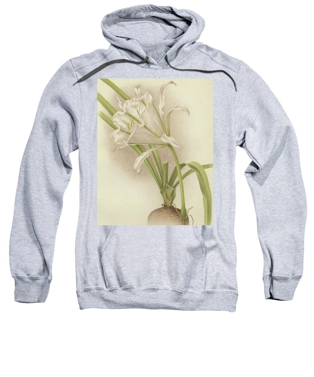 Amaryllis Sweatshirt featuring the painting White Amaryllis  Ismene Andreana by English School