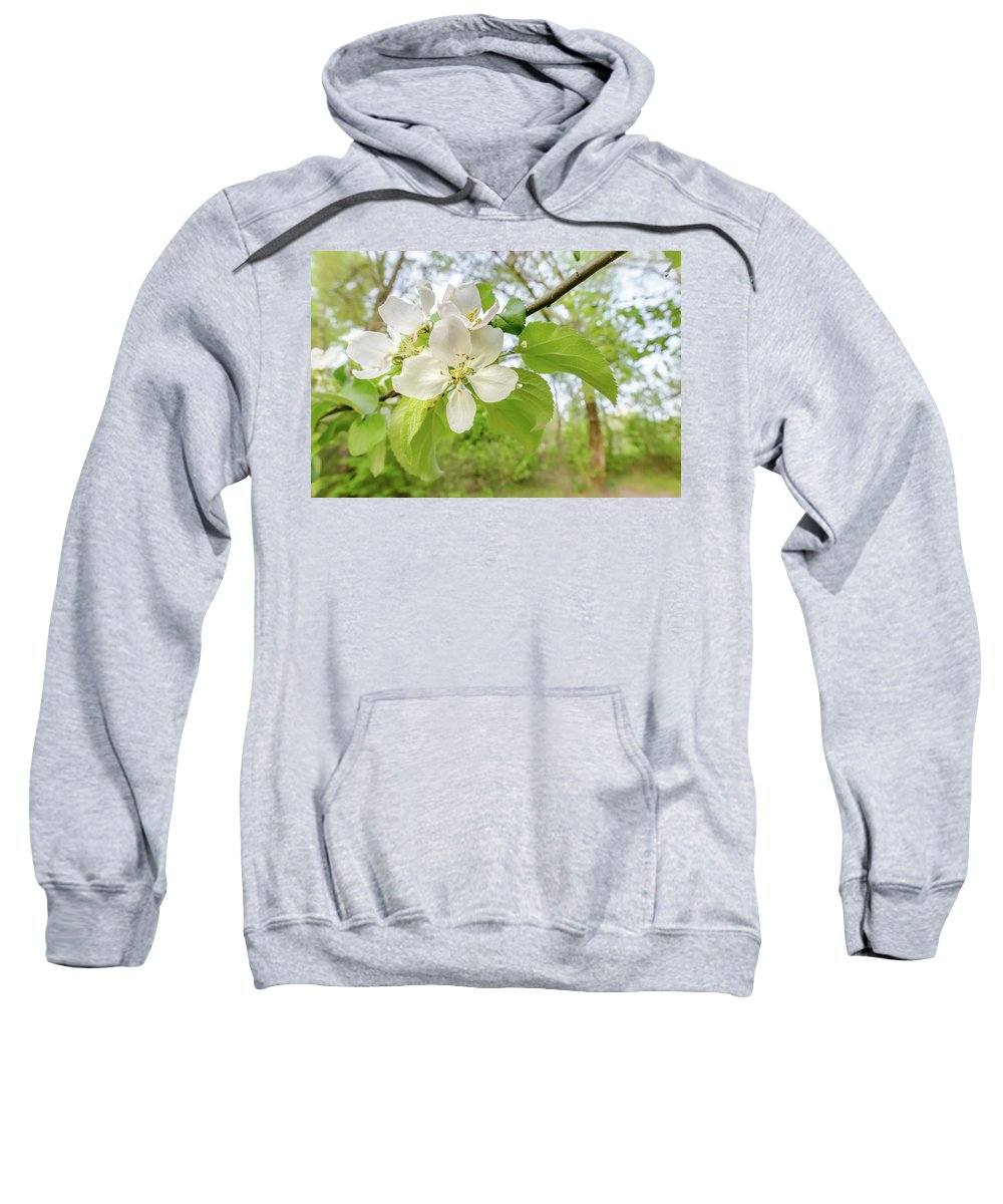 Apple Sweatshirt featuring the photograph White Apple Flower by Alain De Maximy
