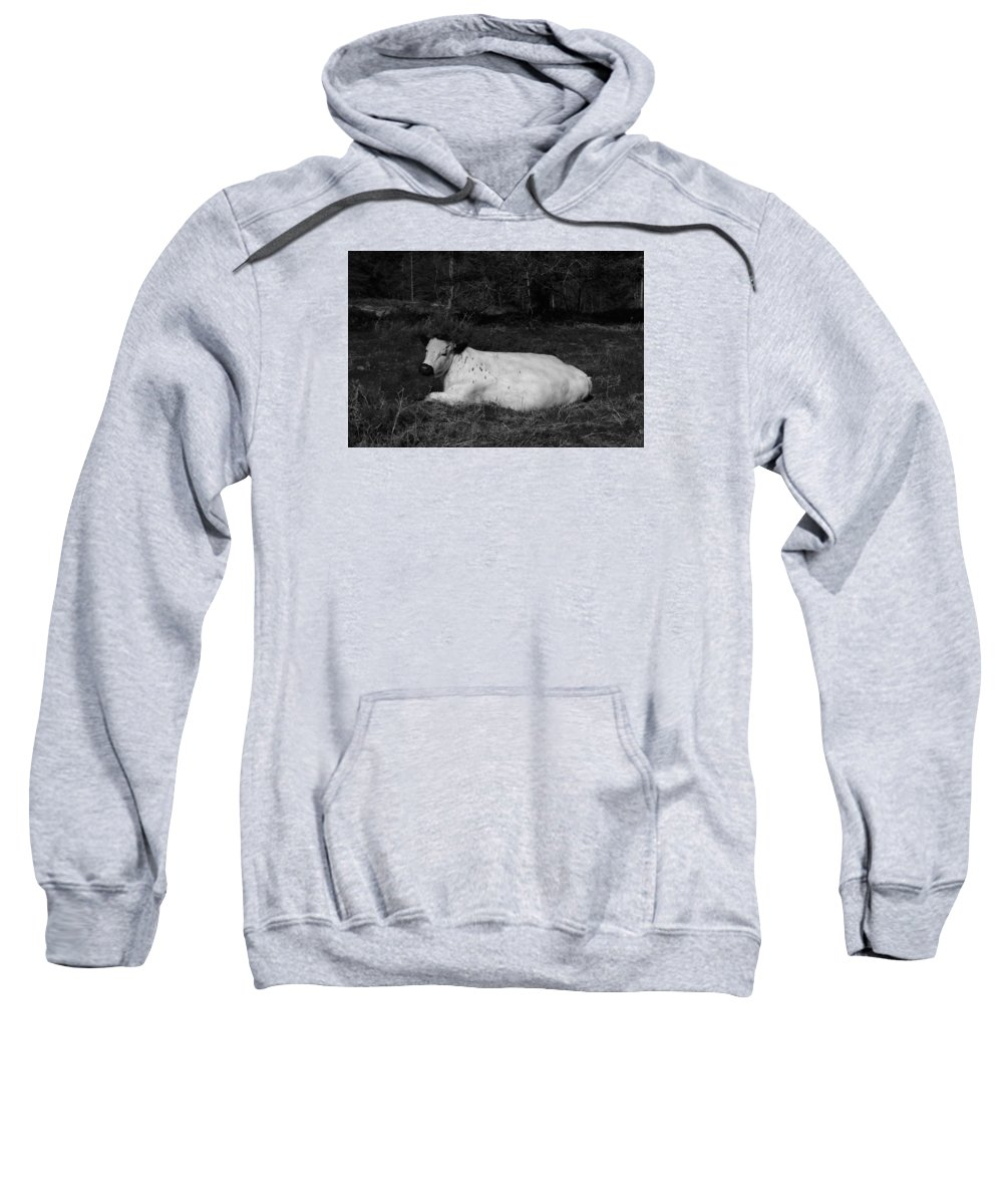 White Sweatshirt featuring the photograph White Cow Luxuriates by Adrian Wale