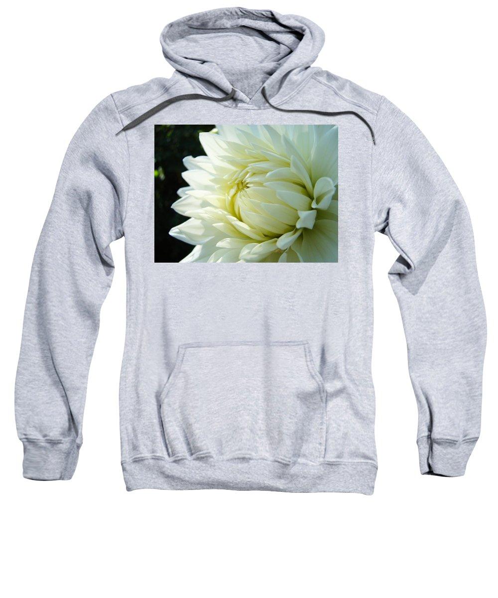 Dahlia Sweatshirt featuring the photograph White Dahlia Flower Art Print Canvas Floral Dahlias Baslee Troutman by Baslee Troutman