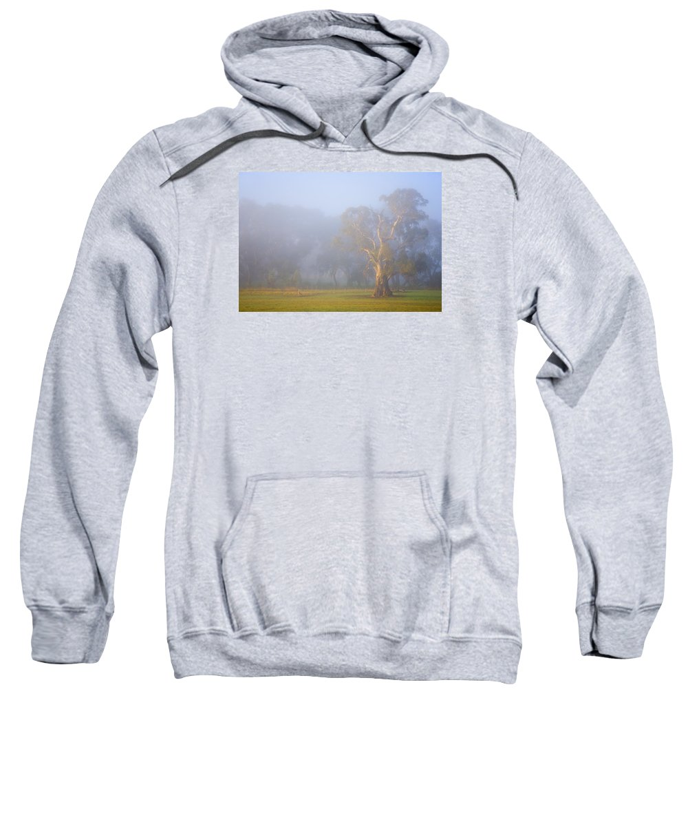 Tree Sweatshirt featuring the photograph White Gum Morning by Mike Dawson