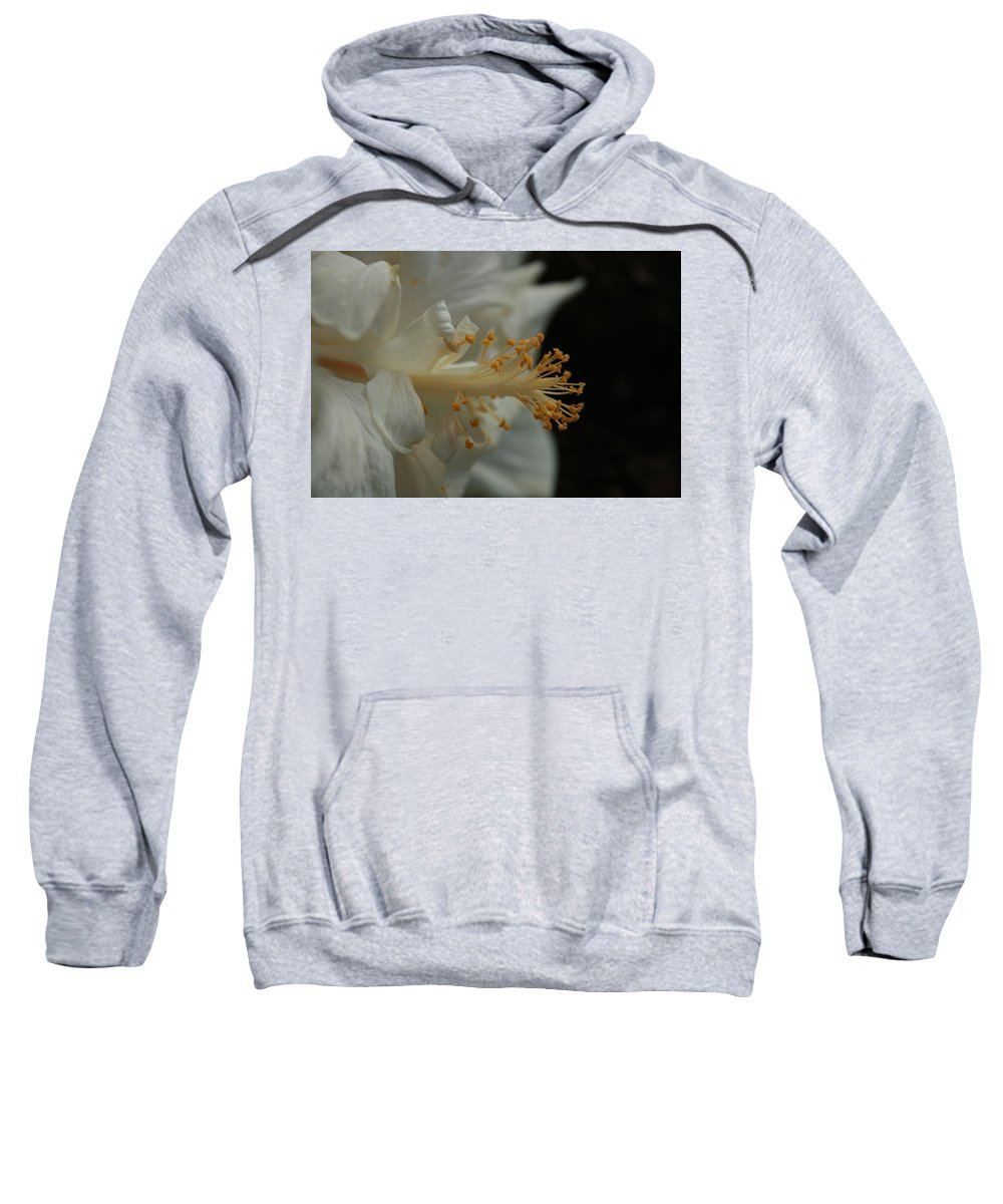 White Hibiscus Sweatshirt featuring the photograph White Hibiscus by Jennifer Bright